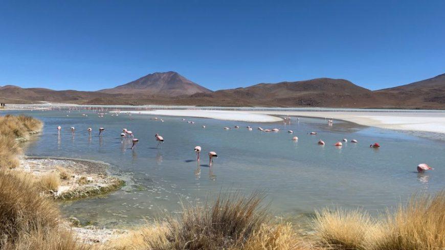 Flamencos en la Laguna Hedionda