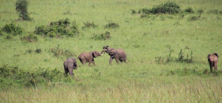 Elefantes safari en Kidepo Valley, Uganda