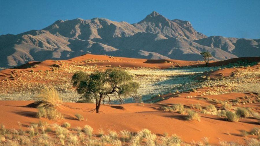 Desierto de Kalahari con un árbol