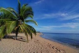 la playa de Punta Uva, de arena blanca, con una palmera a la izquierda en la arena y el mar a la derecha