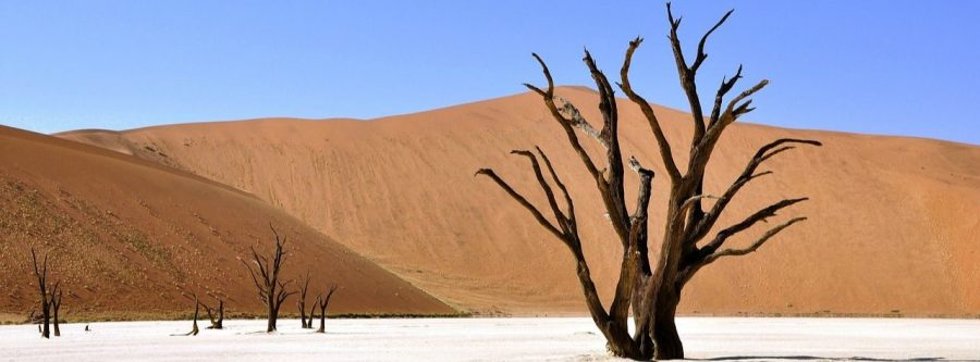 desierto con árboles muertos de deadvlei
