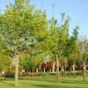 Firenze: ragazza diciassettenne trovata ferita in parco