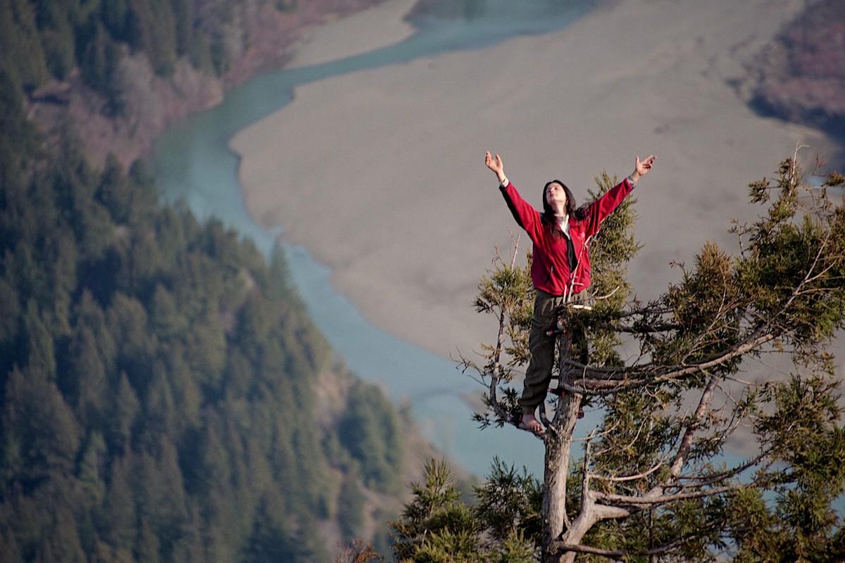 julia butterfly hill - l'attivista per l'ambiente ha vissuto