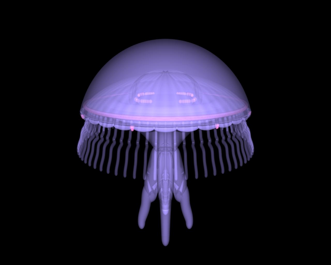 hight resolution of jellyfish v2