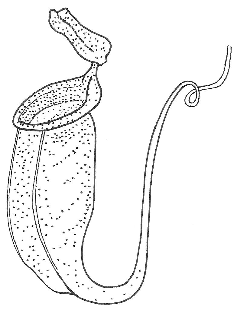 diagram at venus flytrap colouring pages
