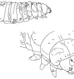 diagram of housefly [ 1128 x 857 Pixel ]