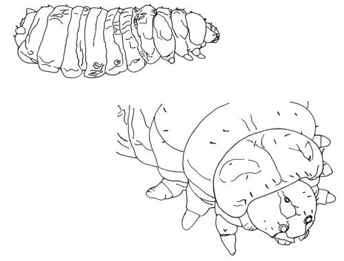 small resolution of diagram of housefly