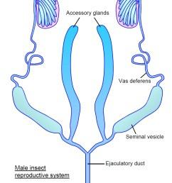 female reproductive structure diagram [ 862 x 1172 Pixel ]