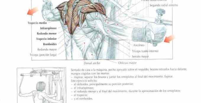 Deltoides posterior en maquina especifica