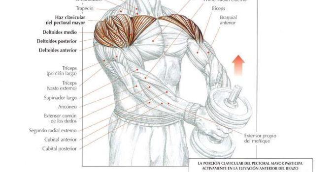 Elevaciones frontales con mancuerna