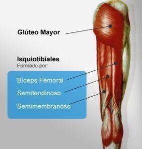 Como evitar lesiones musculares en isquiotibiales I