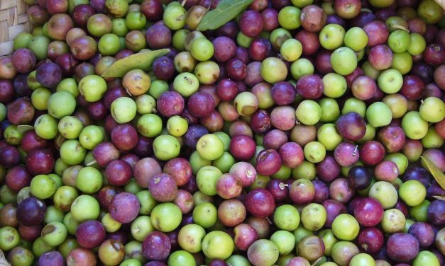 The colors of olive