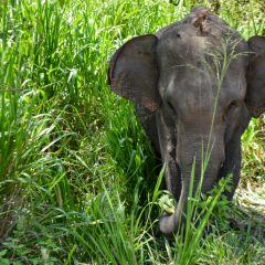 Sri Lanka: A Lucid Dream I Didn't Want to End