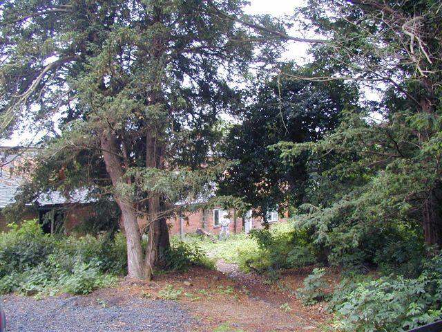2000-june-front-garden