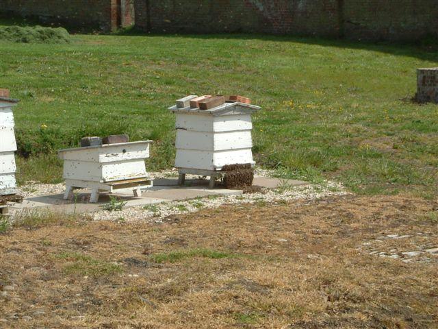 2005-may-11-bees-1