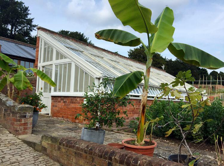 Fig House