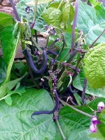 Greenhouse produce 2