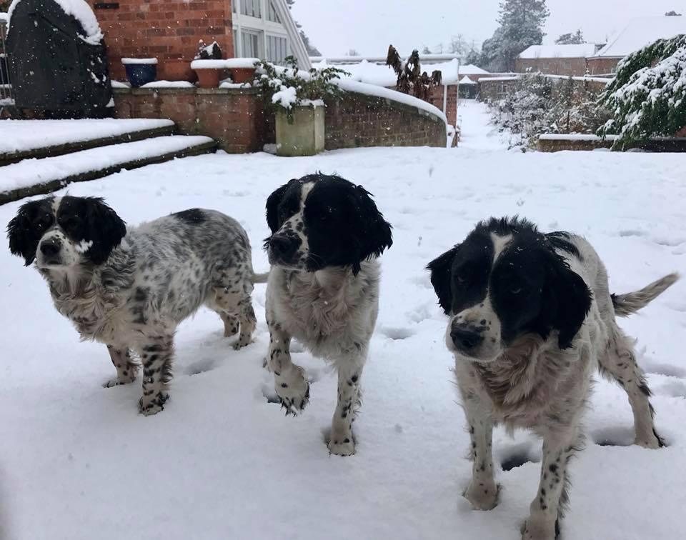 Snow dogs 1