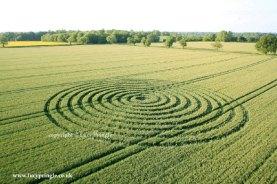 Sherston, Wiltshire. 10th June 2015 Wheat. c.200ft (61m) diameter. A Spiral design.