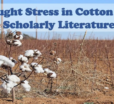 Drought Stress in Cotton 2020