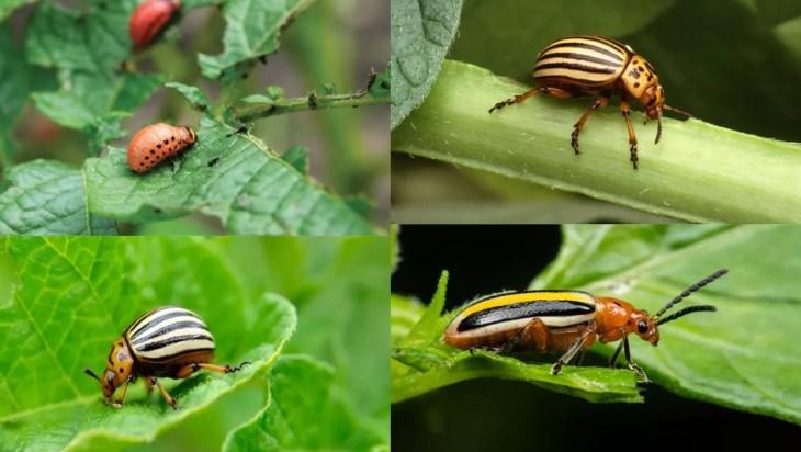 Plant, Land, and Pest Diversity Relationship