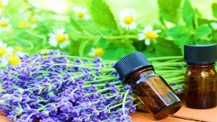 Boost in Plant Oil Content