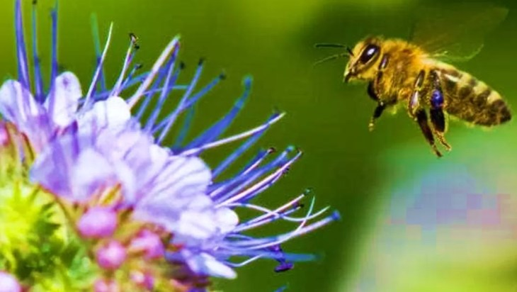 bee lunch