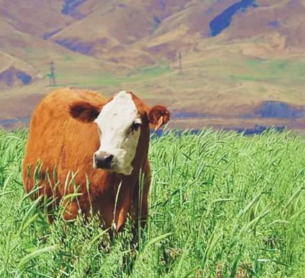 5 Principles of Regenerative Agriculture
