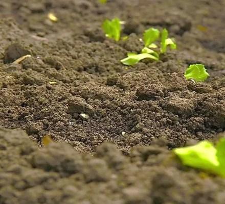 Virtual Soil Community Center