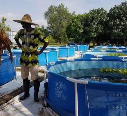 African Aquaponics Market