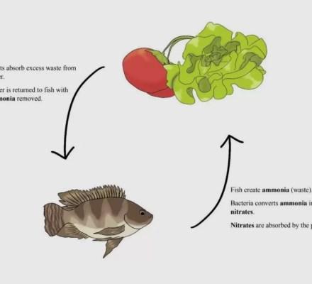 Aquaponics Self Sustaining System