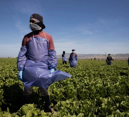 Coronavirus And Its Prevalence In Food Workers