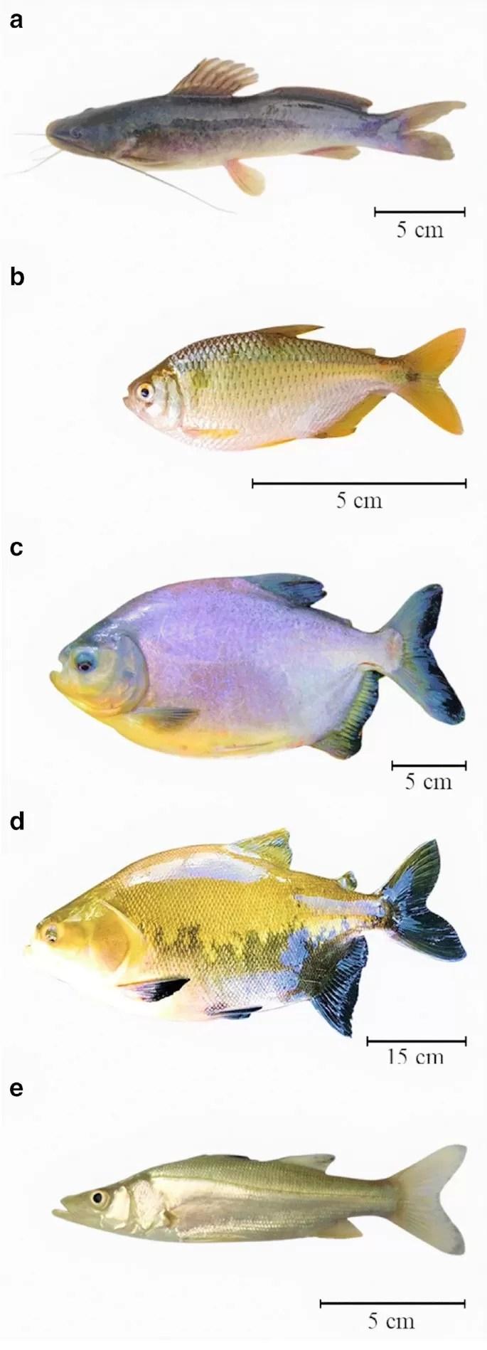 Fish Species Suitable For Aquaponics systems
