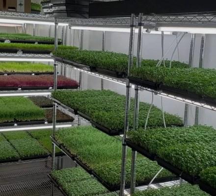 Future Food Crop Microgreens