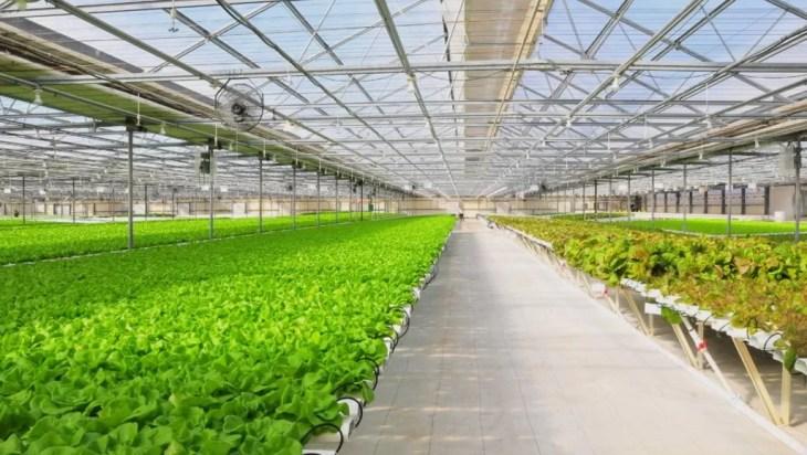 Malaysias Aquaponics Revolutionizes Farming