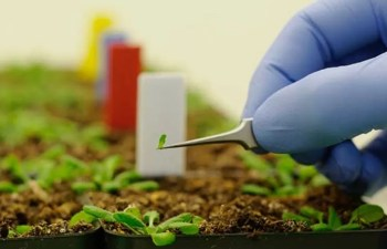 Nanotechnology In Iranian Agriculture
