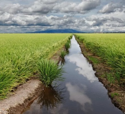 Pesticides Heavily Pollute Small Streams In Agricultural Ecosystems