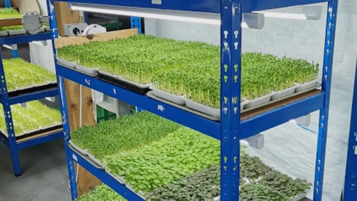 Sprouts vs. Microgreens Food Safety