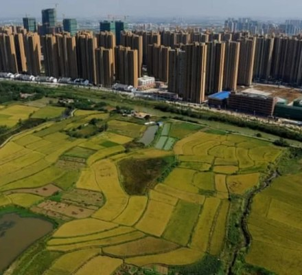 Agriculture Sector Over Housing Colonies