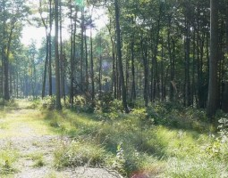 Agricultural Forestry Partnership