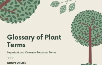 Plant Terms