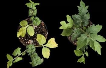 Plant Stress Response Compound
