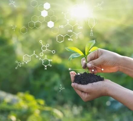 Plants Responses To Light