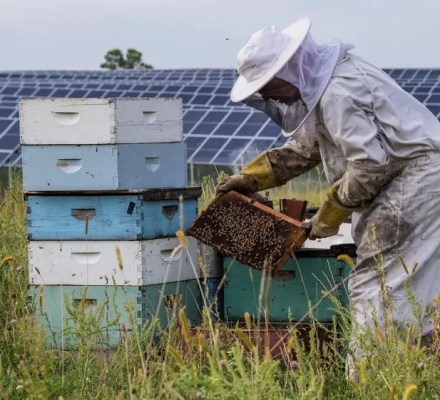 Solar Parks With Honeybee Hives