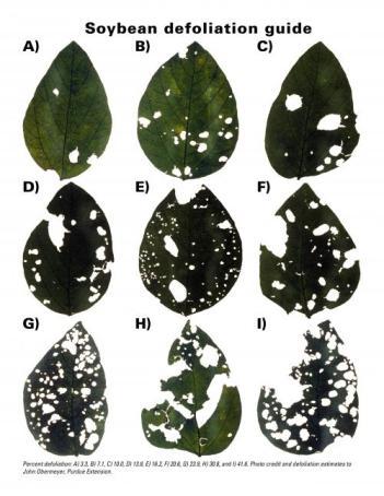 Estimation of soybean defoliation.