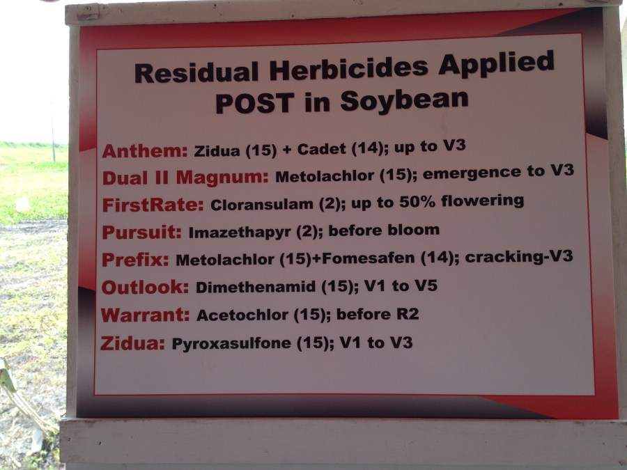 Figure 22. Soybean herbicide options with residual to help next season when all this waterhemp goes to seed.