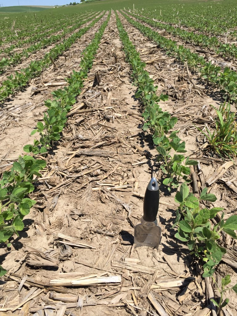 20 inch planted soybeans V2 stage 142,000 plants per acre