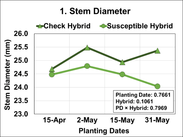 Graph of Effects of four planting dates and two hybrids on stem diameter measured at ground/soil level.