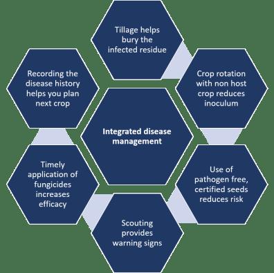 Integrated disease management plan