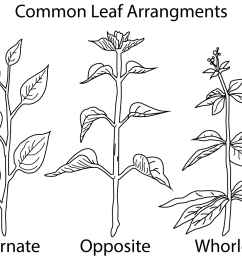 a picture of different types of leaf [ 1200 x 926 Pixel ]